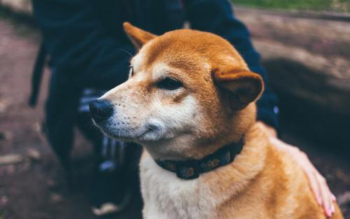 Gentle Dogs